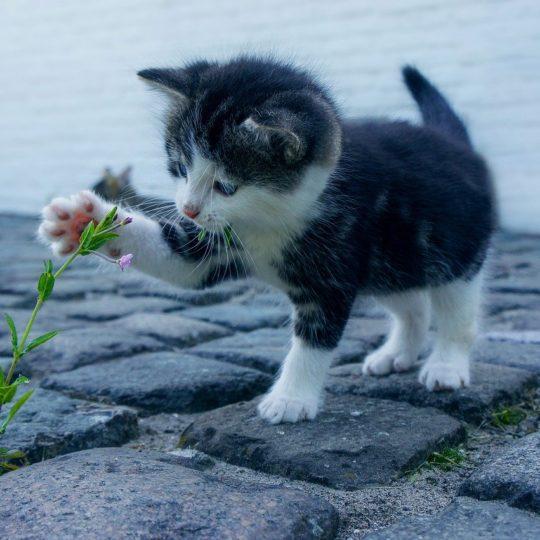 Naturheilmittel für Katzen