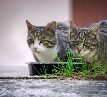 Katzenfutter trocken oder nass